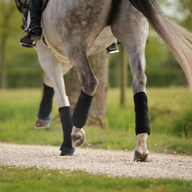 Sous-bandes de travail cheval x4 Kentucky - Le Paturon