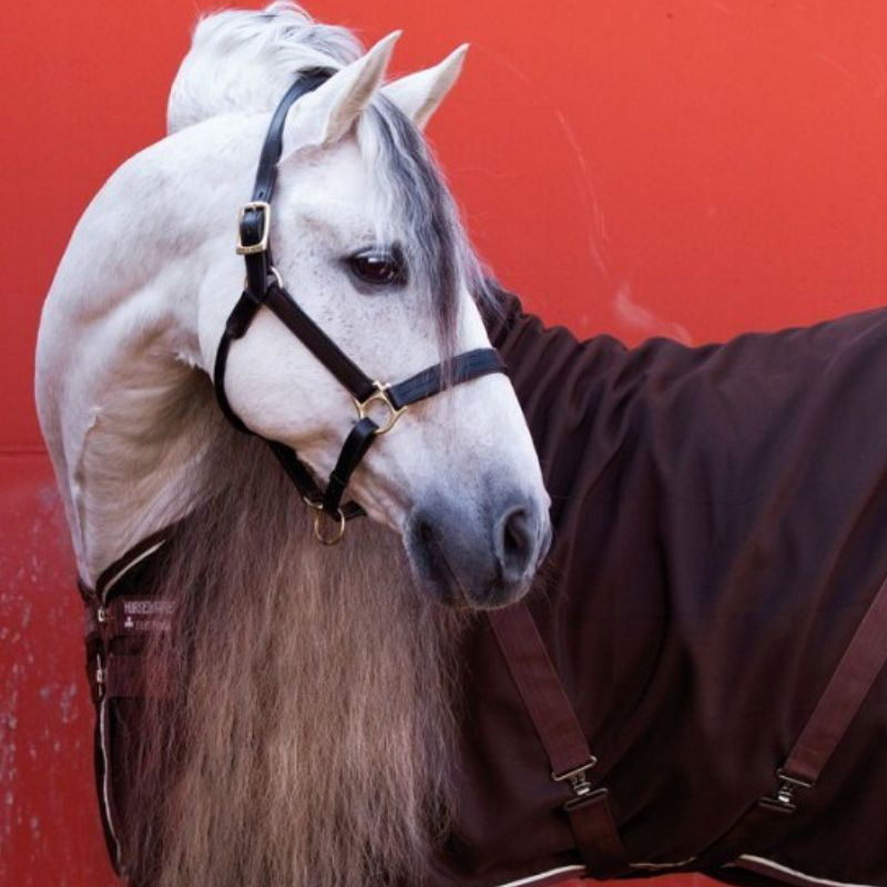Chemise écurie cheval transport Rambo Stable Horseware - Le Paturon