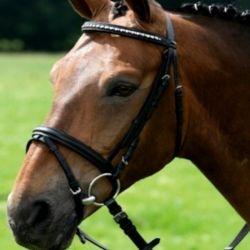 Bridon cheval Crystal Rainbow muserolle combinée Waldhausen - Le Paturon