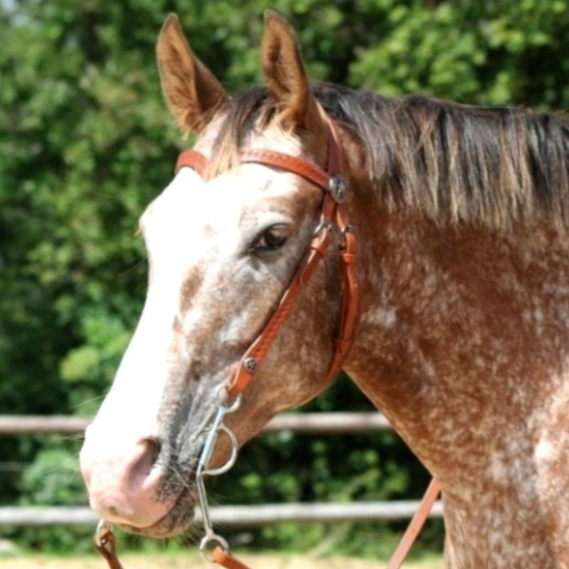 Bridon cheval Iowa western Waldhausen - Le Paturon