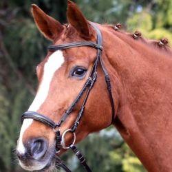 Bridon cheval Marbella cuir X-line muserolle allemande Waldhausen - Le Paturon