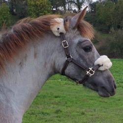 Licol mini shetland ou poulain Kentucky cuir et mouton - Le Paturon