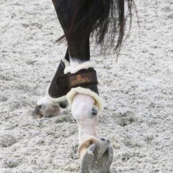 Protège-boulets cheval Turnout mouton Kentucky - Le Paturon