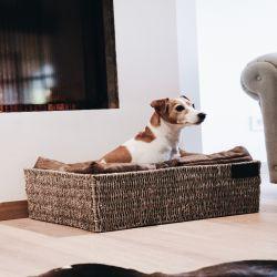 Panier Basket chien Kentucky - Le Paturon