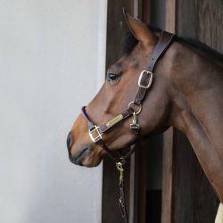 Licol cheval anatomique Kentucky - Le Paturon