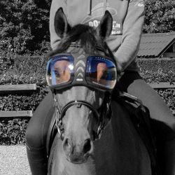 Lentilles de remplacement masque lunettes eVysor cheval eQuick transparent - Le Paturon