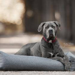 Panier Harcour chien Soft Sleep - Le Paturon