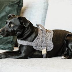 Body Safe Wool Kentucky harnais chien gris - Le Paturon