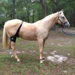 Bande régénérante grasset et rotule cheval Fenwick technologie titane liquide - Le Paturon