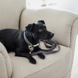 Laisse Wool Kentucky chien 120cm - Le Paturon
