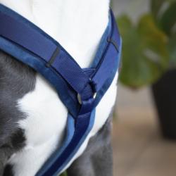 Harnais Velvet Kentucky chien marine - Le Paturon