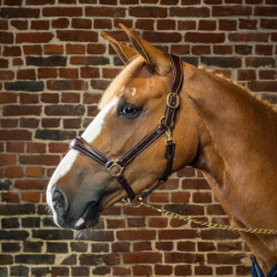 Licol cuir Dy'on Collection cheval transport et grooming noisette - Le Paturon