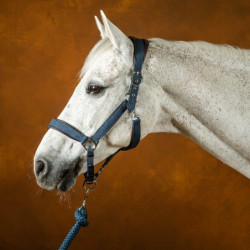 Licol cheval Dy'on New English Collection nubuck transport et grooming marine - Le Paturon