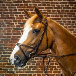 Bridon Dy'on cheval X-Fit D Collection noisette - Le Paturon