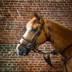 Bridon Dy'on cheval double muserolle D Collection noisette - Le Paturon