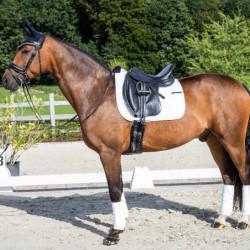 Dy'on tapis Concours dressage cheval - Le Paturon