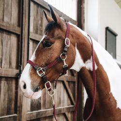 Licol Kentucky Nylon tressé cheval cuirLicol Kentucky Nylon tressé cheval cuir bordeaux - Le Paturon