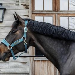 Licol Velvet Kentucky cheval émeraude - Le Paturon