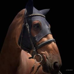 Masque anti stress cheval...