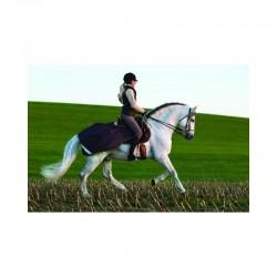 3 Couvre reins cheval, Amigo Competition, Horseware - Le Paturon