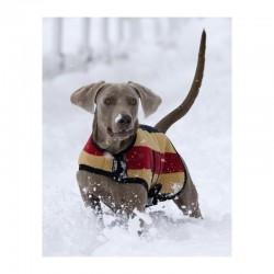 2 Couverture polaire chien Rambo Newmarket,Horseware,temp