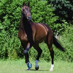 5 Botte de soin cheval Kevlar,Woof Wear,Soin du sabot