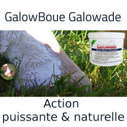 2 Galow Boue Cheval, gale de boue, Galowade