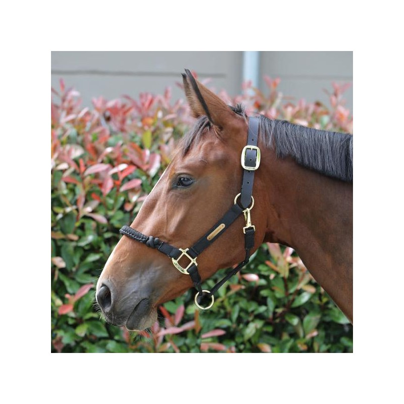 1 Licol nylon cheval contrôle,Kentucky,Licol cheval et Muselaine