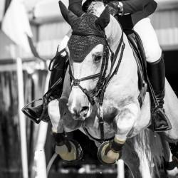 3 Chaussette Tendons Grip 5 mètres ,Kentucky,Bande cheval