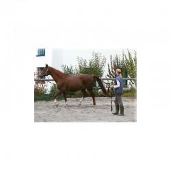 3 Longe à tourner polypropylène 7,5 m : Longe cheval - Le Paturon