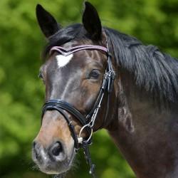 1 Bridon cheval cuir muserolle combinée X-Line Luca,Waldhausen,Bridon cheval