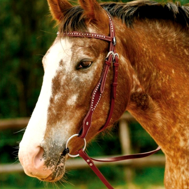 1 Bridon cheval Kansas Waldhausen, Bridon western cheval, Le Paturon - Waldhausen