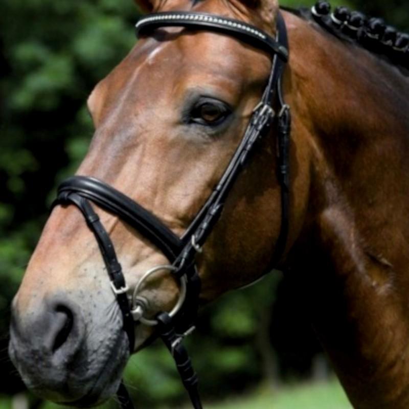 1 Bridon Pamplona Waldhausen, Bridon cheval cuir muserolle pull-back, Le Paturon - Waldhausen