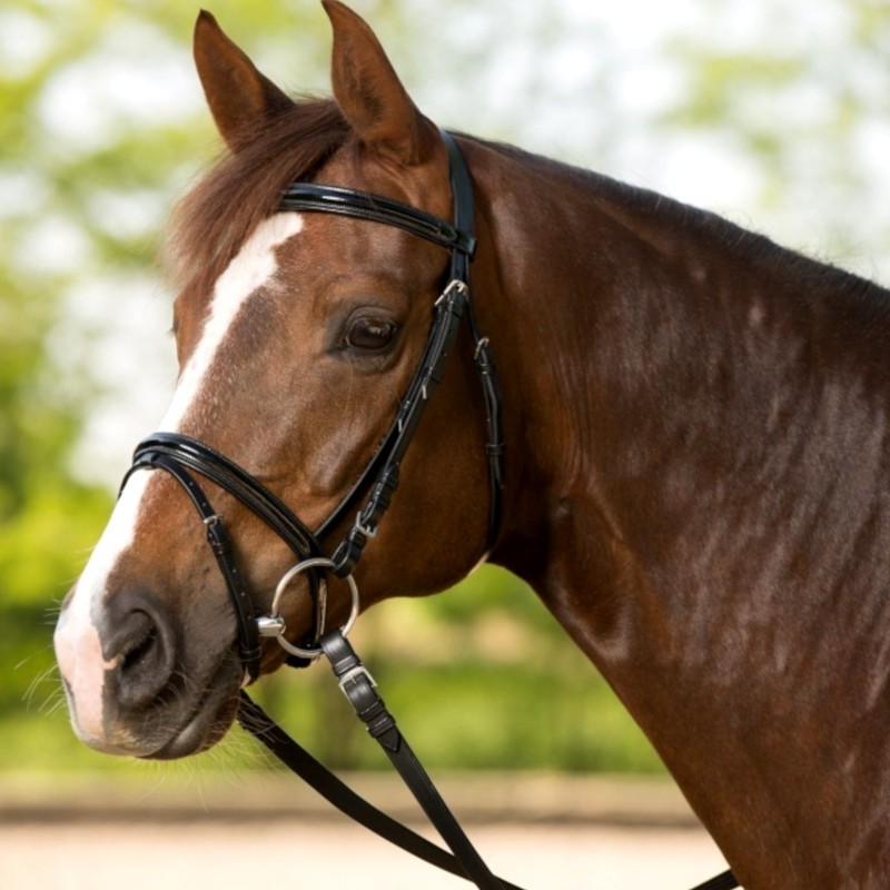 1 Bridon Glossy Waldhausen, Bridon cheval cuir muserolle combinée, Le Paturon - Waldhausen