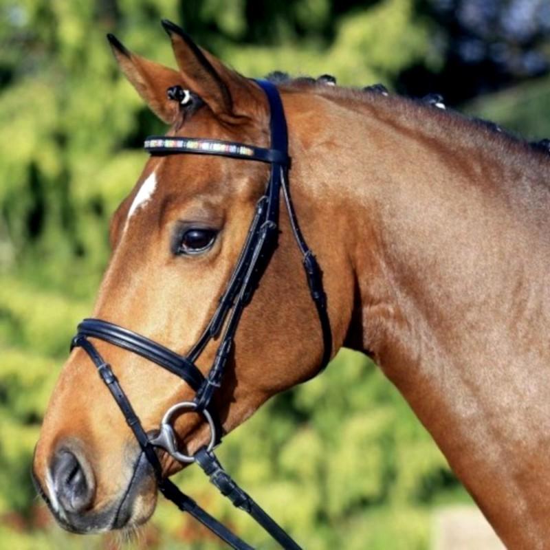 1 Bridon Fascination Waldhausen, Bridon cheval muserolle combinée, Le Paturon - Waldhausen