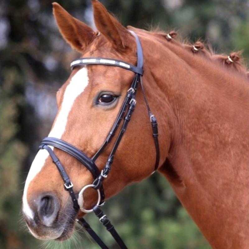 1 Bridon Enjoy Waldhausen, Bridon cheval cuir muserolle combinée, Le Paturon - Waldhausen