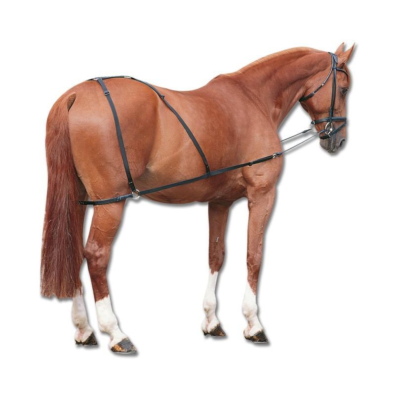 1 Enrênement arrière-main Kombi Trainer Waldhausen, Enrênement cheval, Le Paturon - Waldhausen