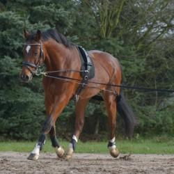 1 Enrênement cheval aide à la longe,Waldhausen, Enrênement équitation