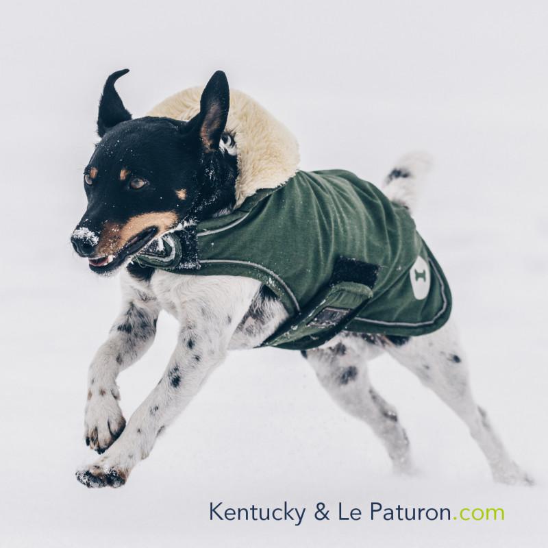 1 Manteau Chien Imperméable : Chien Kentucky - Le Paturon