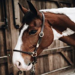 2 Licol de pansage,Kentucky,Licol cheval et Muselaine