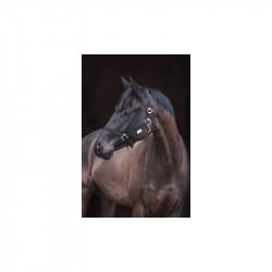 Licol en nylon pour cheval de trait Stable Pro - Le Paturon