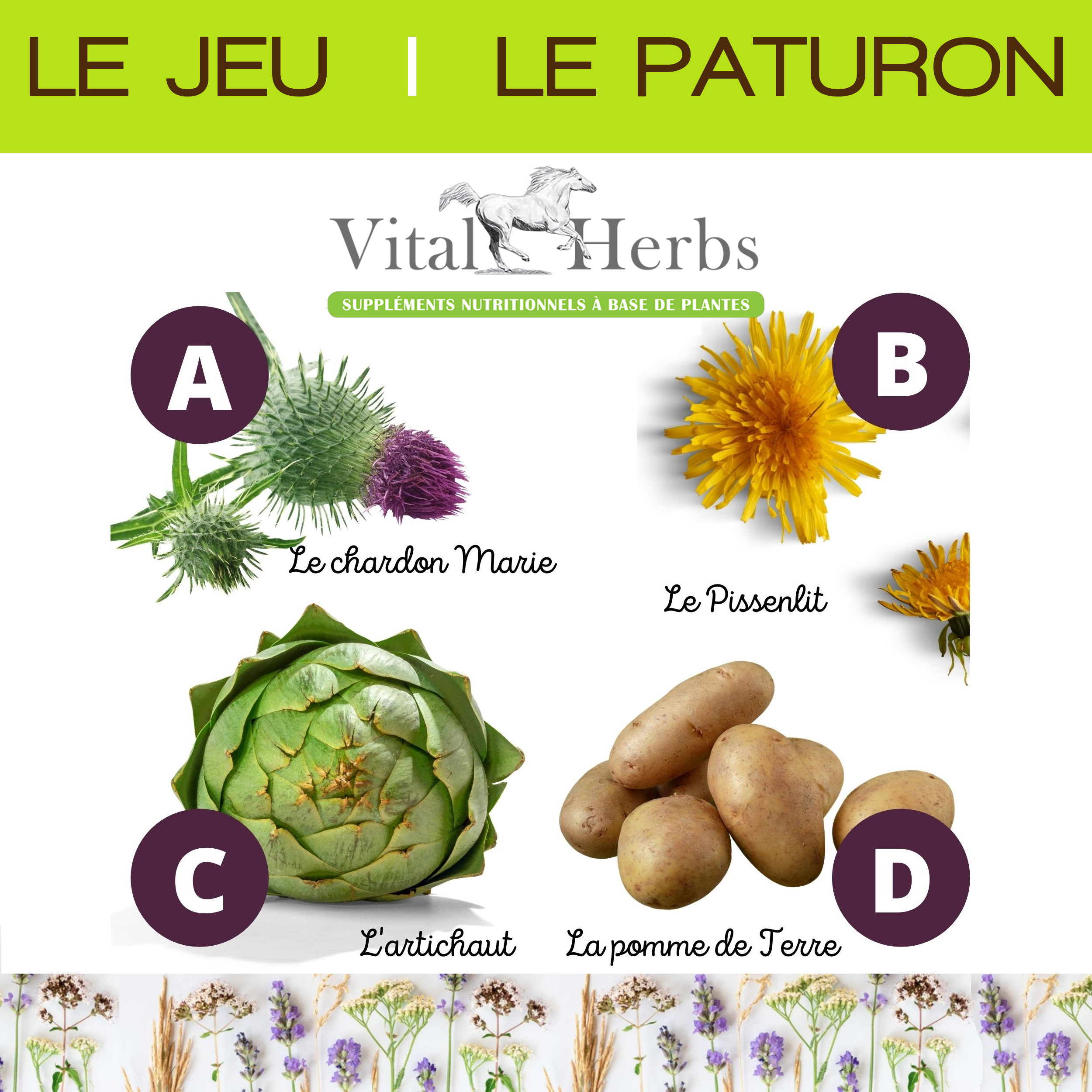 Jeu Vital Herbs - Le Paturon