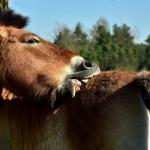 Dermite estivale cheval - Le Paturon