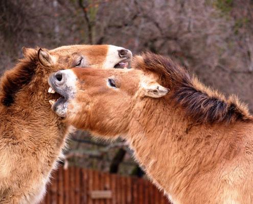 Traitement dermite cheval - Le Paturon