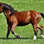 Parasitisme du cheval