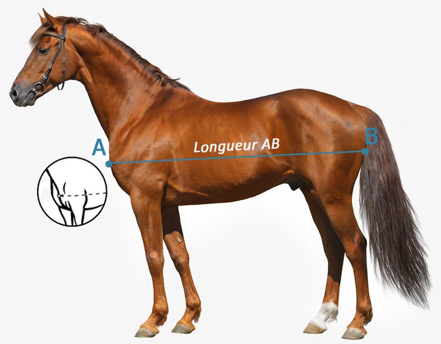 Comment choisir taille de couverture cheval Bucas ?