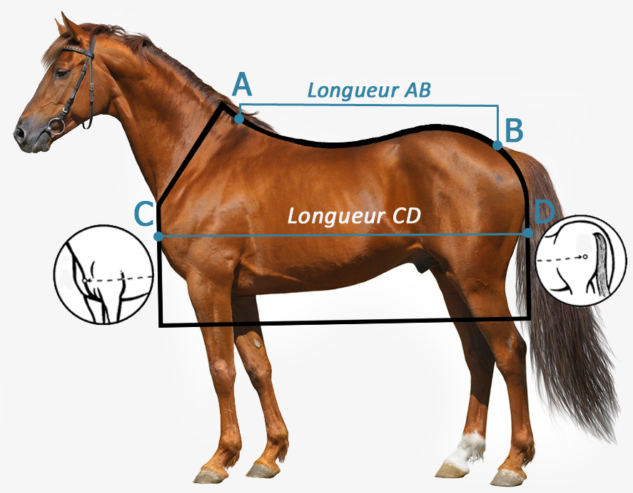 Comment choisir taille Couverture cheval Waldhausen ?