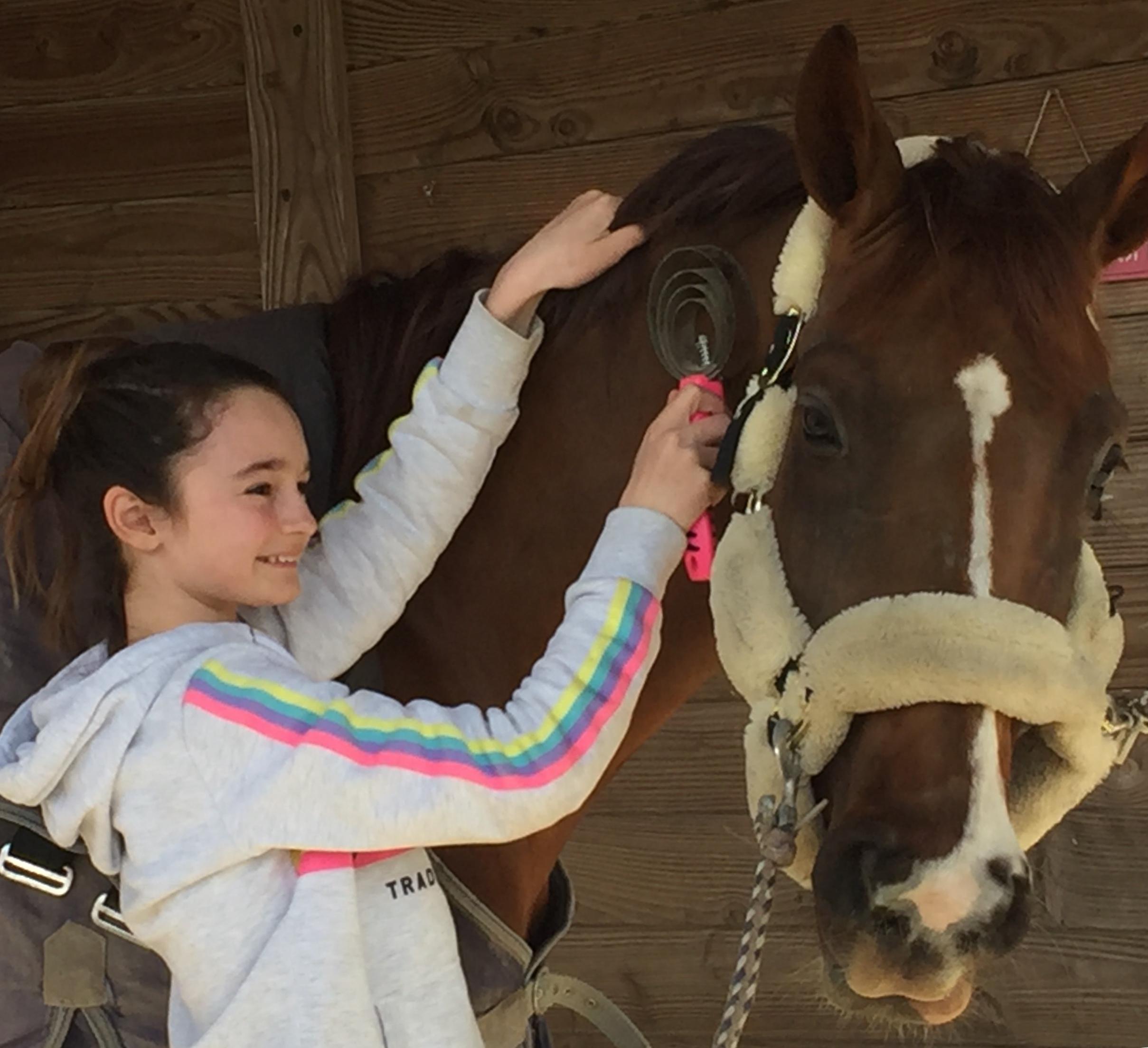 brosse métallique étrille américaine pansage cheval