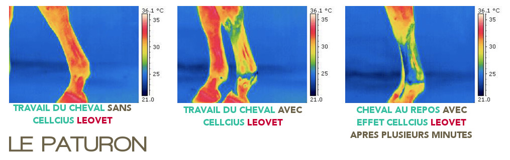Cellcius Leovet - Tendinite cheval - Le Paturon