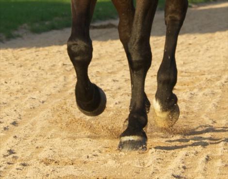 Huile soin sabot cheval Stimule Pousse sabot chevla Michel Vaillant - Le Paturon